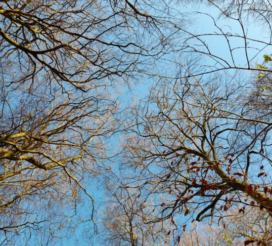 forest-blue-sky